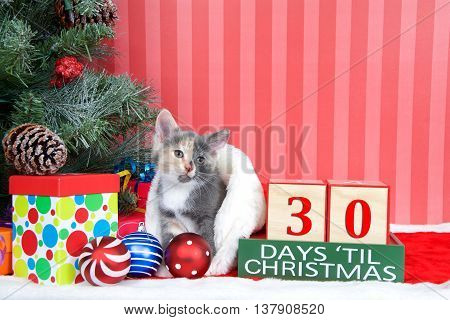 Calico kitten coming out of a stocking next to a christmas tree with colorful presents and holiday balls of ornaments next to Days until Christmas light beech wood blocks 30 days til Christmas