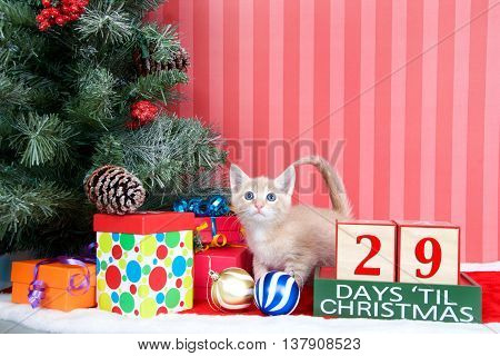 Orange tabby kitten coming out of a stocking next to a christmas tree with colorful presents and holiday balls of ornaments next to Days until Christmas light beech wood blocks 29 days til