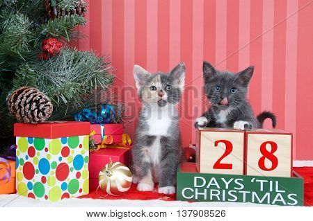 Calico and gray and white kittens next to christmas tree with colorful presents and holiday balls of ornaments next to Days until Christmas light beech wood blocks 28 days til