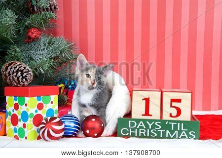 Calico kitten coming out of a stocking next to a christmas tree with colorful presents and holiday balls of ornaments next to Days until Christmas light beech wood blocks 15 days til Christmas
