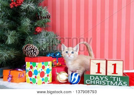Orange tabby kitten coming out of a stocking next to a christmas tree with colorful presents and holiday balls of ornaments next to Days until Christmas light beech wood blocks 11 days til