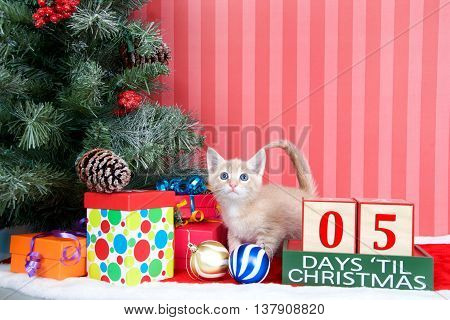 Orange tabby kitten coming out of a stocking next to a christmas tree with colorful presents and holiday balls of ornaments next to Days until Christmas light beech wood blocks 05 days til
