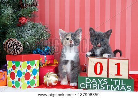 Calico and gray and white kittens next to christmas tree with colorful presents and holiday balls of ornaments next to Days until Christmas light beech wood blocks 01 days til