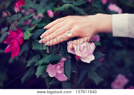 Woman hand with french french manicure and ring on roses flowers