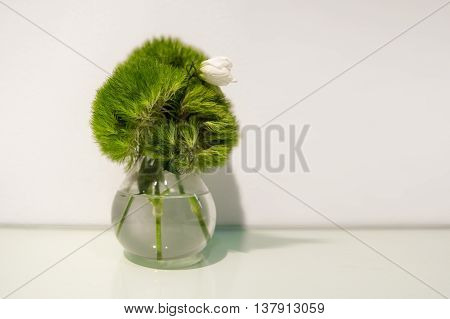 Green plant wiht a flower in glass vase in fron of white wall