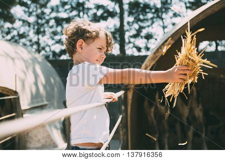 Side view of cute little boy feeding animals with hay in sunlight