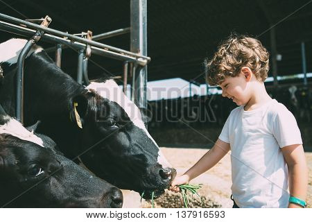 Side view of smiling cute boy feeding cows with grass