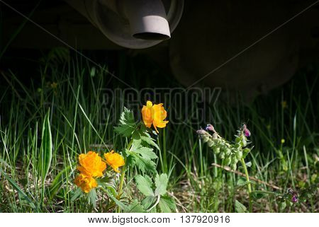 flowers under the exhaust pipe of the car