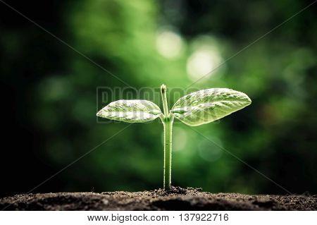plant seedling growing on fertile soil / baby plant begins new life