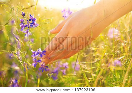 Woman hand running through meadow field with wilde flowers. Girl's hand touching wildflowers closeup. Health care concept. Rural field. Hand Skin care treatment, Alternative medicine. Environment