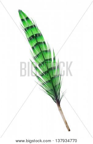 variegated green feather isolated on white background