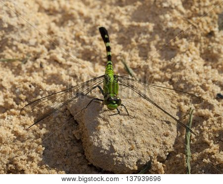 Green dragonfly that has landed on some sand