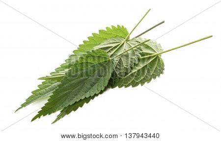 Nettle Leaves Isolated