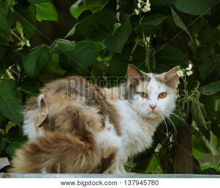 a cat lying  in the garden