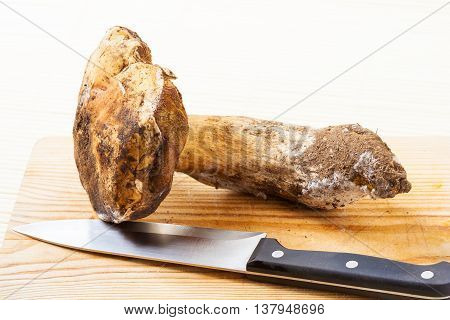 Fresh dirty cep on a wooden cutting board with a knife.