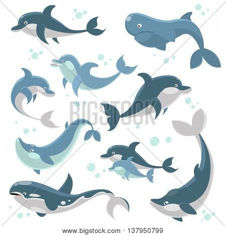Dolphins and whales collection. Big set of marine mammals. Vector illustraion.