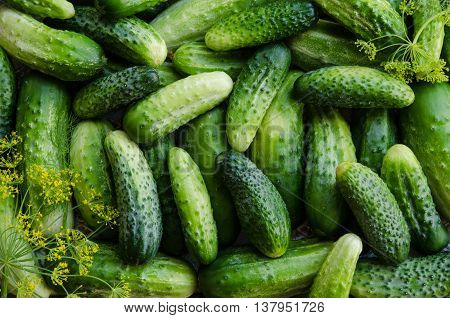 Preserving cucumbers background with dill. Top view.