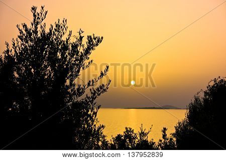 Mediterranean flora at sea coast lit by summer sun at golden hour before sunset in Macedonia, Sithonia, Greece