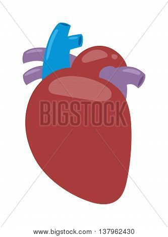 Human heart anatomy isolated on white vector illustration. Biology body science medicine muscle human heart people organ. Coronary cardiology life human heart internal shape symbol.