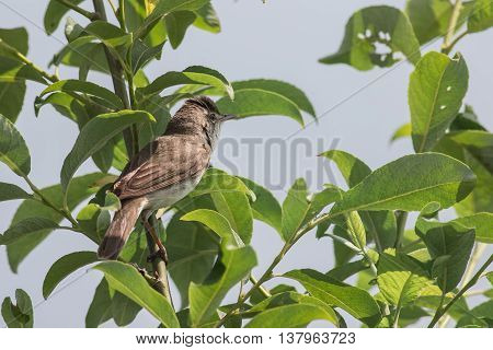 Garden warbler sitting on a tree branch