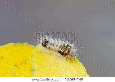 Close Up Worm, Caterpillars