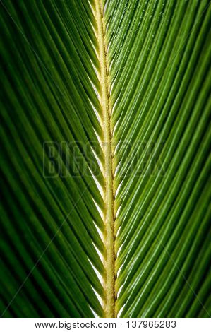 Close up green leaf of texture background