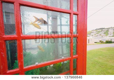 Red public telephone box converted to aquarium in Beer Head Caravan Pak near village Beer in Devon