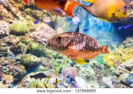 Underwater World Of Exotic Fishes In An Aquarium