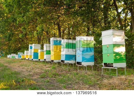 Bee hive stand on the meadow .