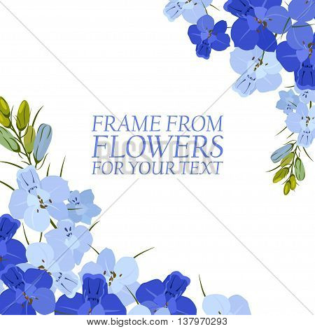 Illustration with light blue and blue flowers, delphinium isolated. On white background.