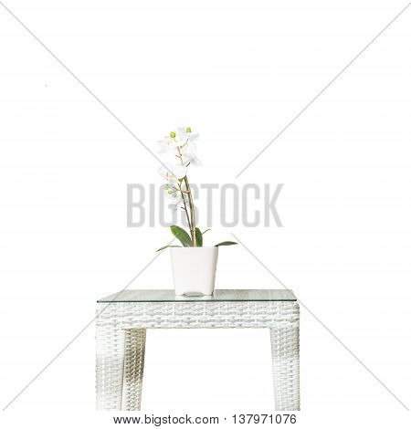 Closeup artificial plant with white orchid flower on pink flower pot on wood weave table isolated on white background beautiful interior in relaxation concept of house