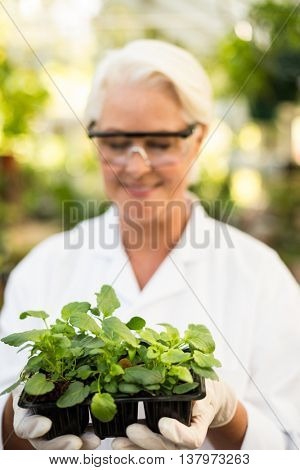 Female scientist holding saplings at greenhouse