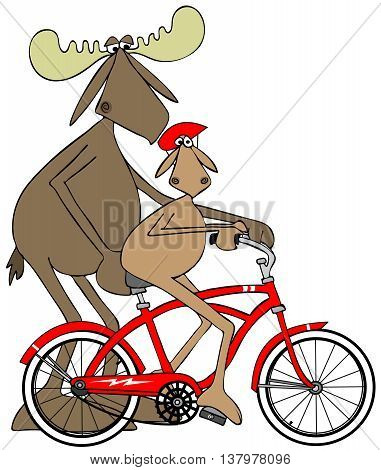 Illustration of a bull moose teaching his calf how to ride a bicycle.