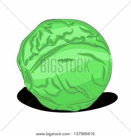 Cabbage. Illustration of vegetables for supermarkets and other