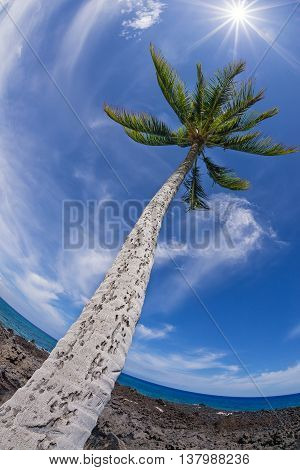 Palm tree top against blue sky and white clouds on a sunny day. Fisheye capture.