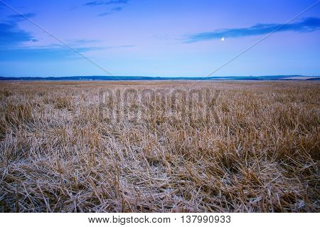 beveled field of wheat spikelets landscape nature