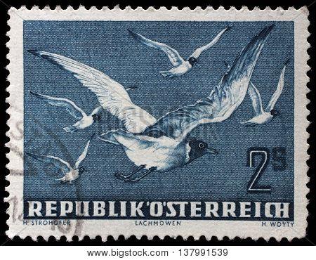 ZAGREB, CROATIA - SEPTEMBER 09: stamp printed by Austria, shows Black-headed Gull ( Larus ridibundus), circa 1950, on September 09, 2014, Zagreb, Croatia