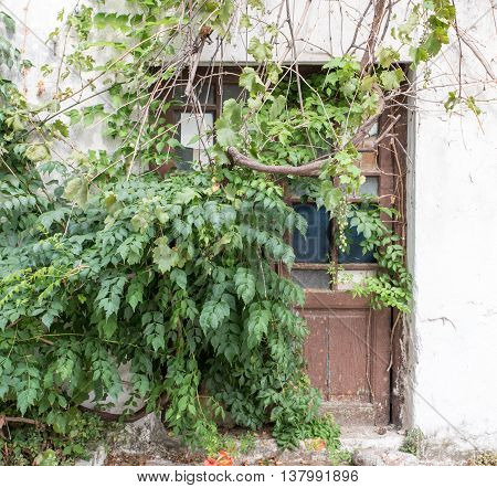 Old door in a house covered with an overgrown plant