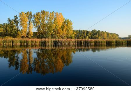 Fall Colors Reflected on a Lake on a Calm Morning