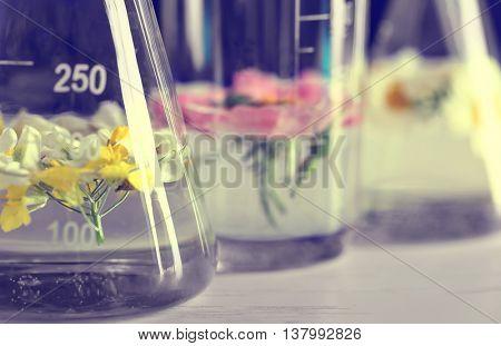 Fresh flowers in test tubes, closeup