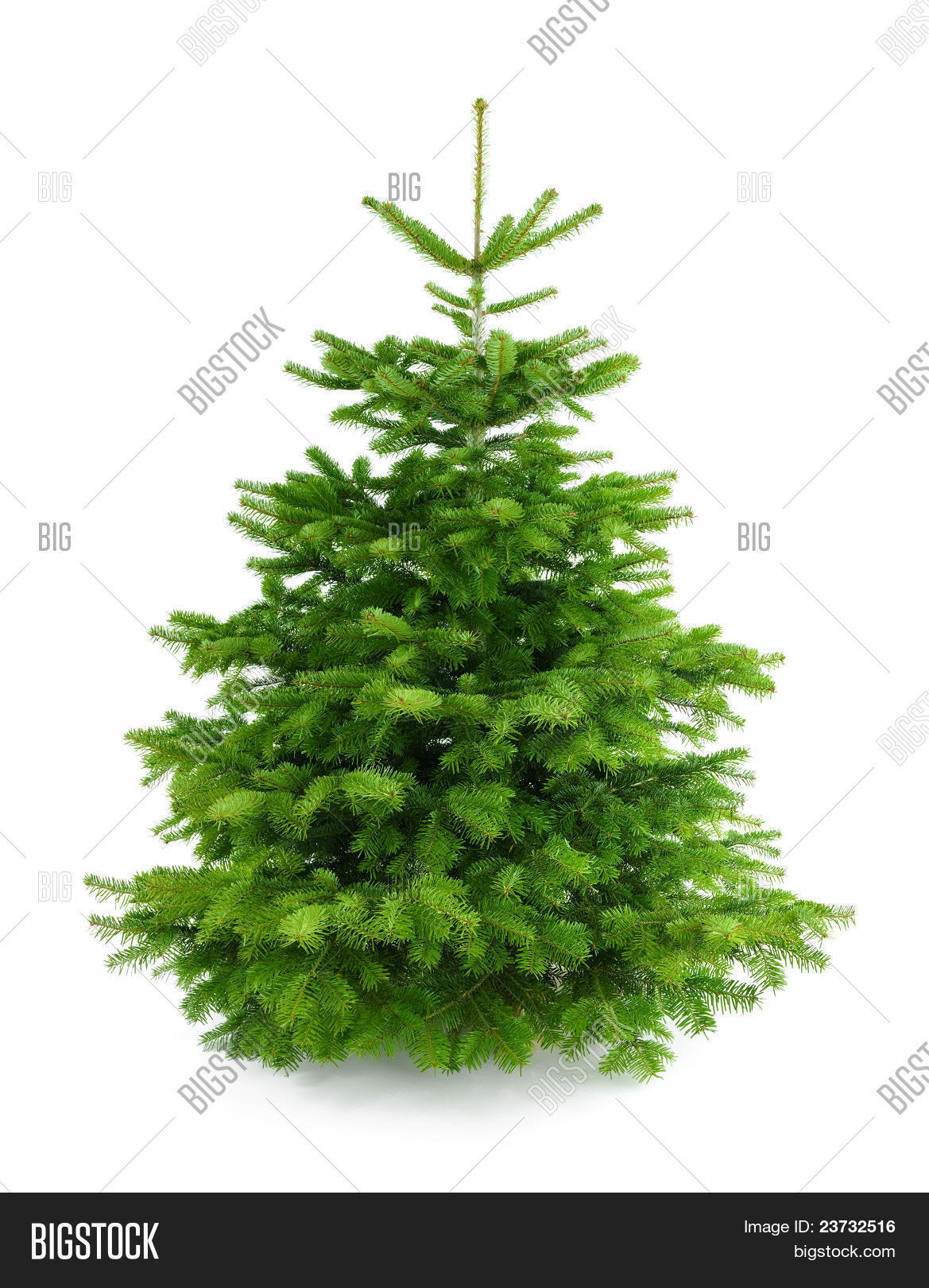 perfect fresh christmas tree without ornaments stock photo ideas about christmas tree without decorations cheap