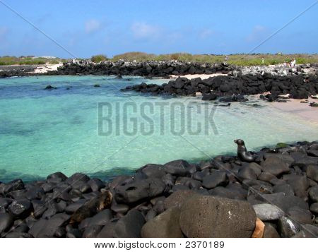 Crystal Clear Water, Volcanic Rock And Seals