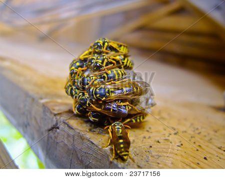 Wasp-Schwarm im Ruhezustand Holzdeck-Makro