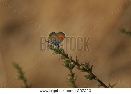 Tiny Butterfly 1