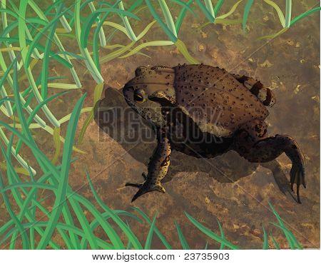 Toad In Habitat