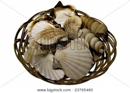 Basket Of Sea Shells