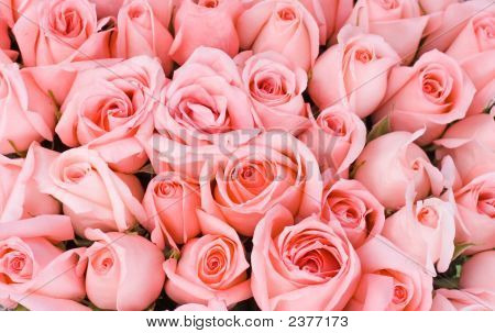Big Bunch Of Multiple Pink Roses Of A Bride On  Wedding From Top, Bridal Photos Series