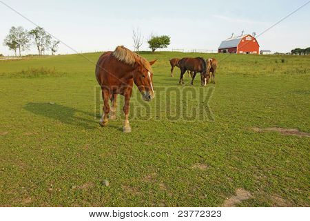 Several Horses And A Barn