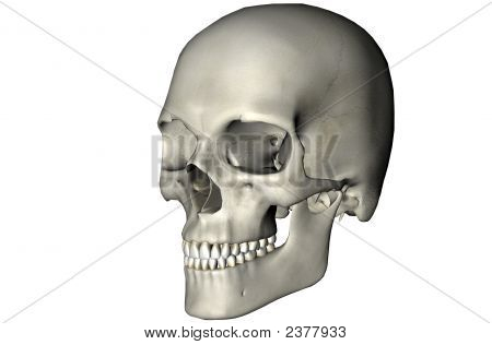 Human Skull Oblique On White Background