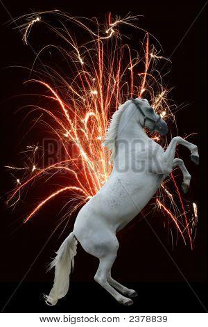 Horse Fireworks